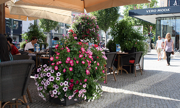PYRA Plant borders in a café